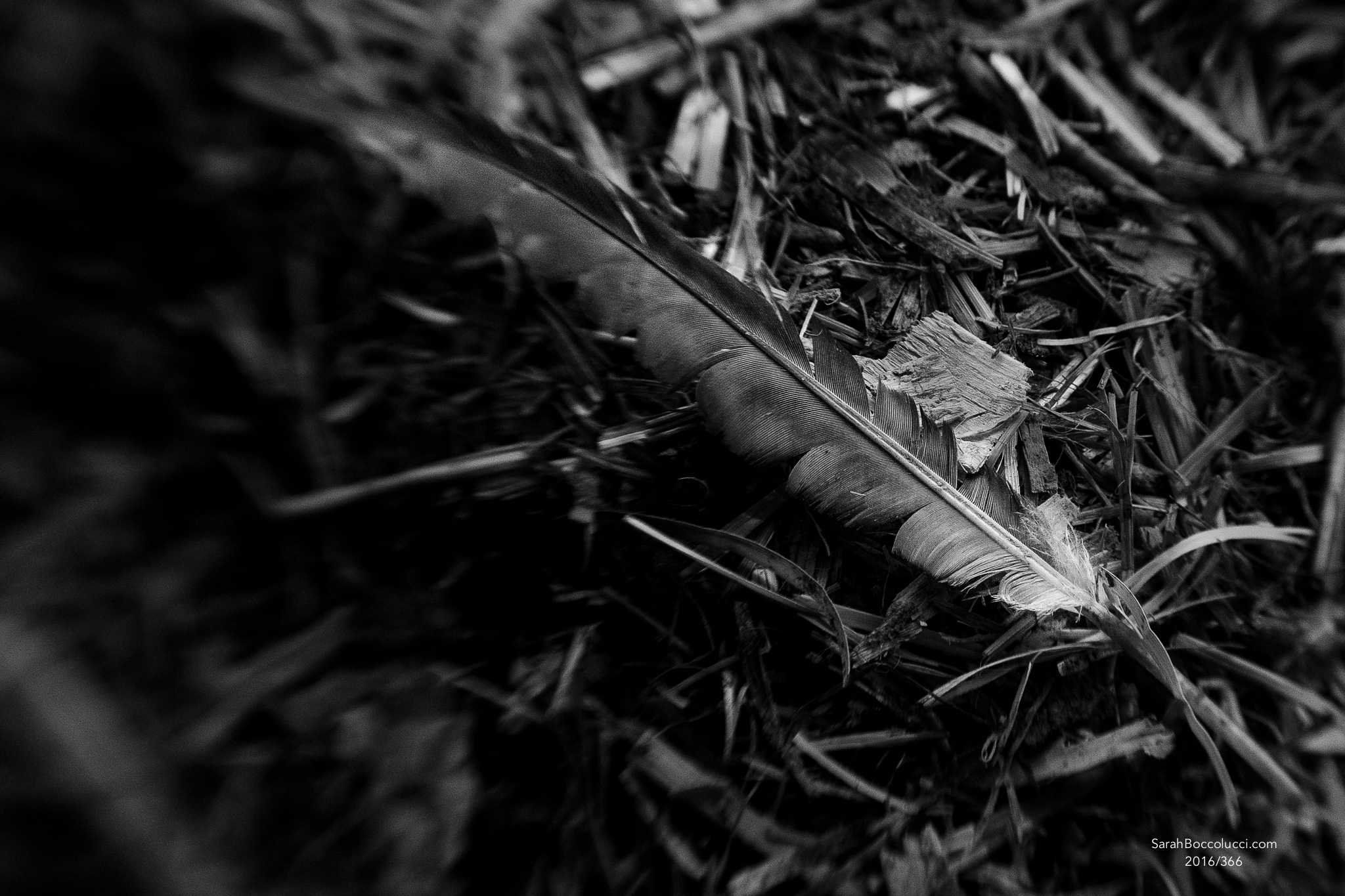 Freelensed Feather