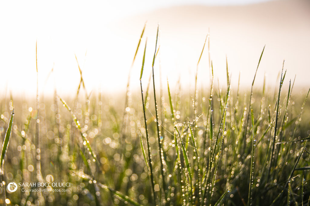Freelensed-grass