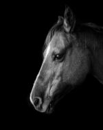 Colorado_Horse_Photographer